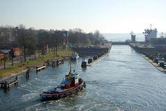 Eine Robbe im Kanal