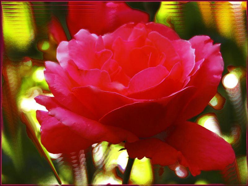 Eine Rose aus Mams Garten...