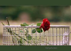 Eine Rose bleibt eine Rose