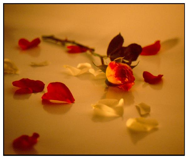 ...eine Rose für ??