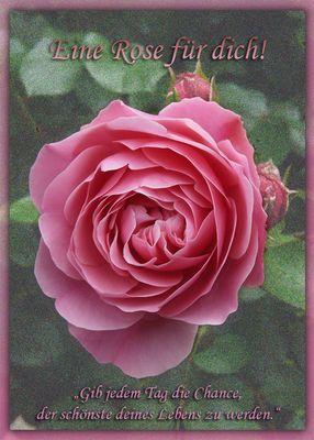 Eine Rose für dich!