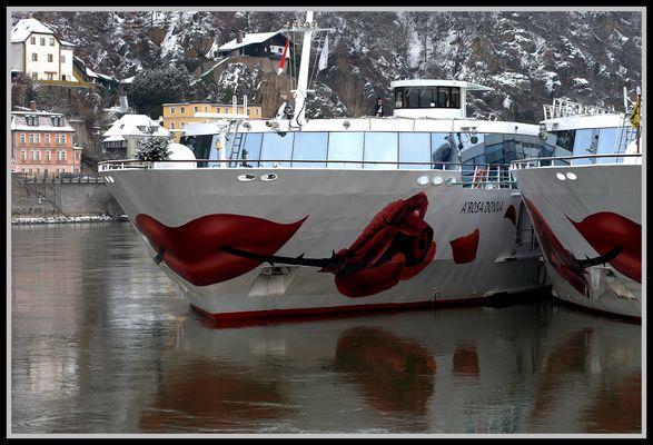 Eine Rose für die Donau