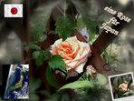 eine Rose für Japan