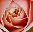eine rose ist...