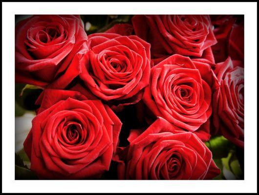 eine Rose, ist eine Rose;-)