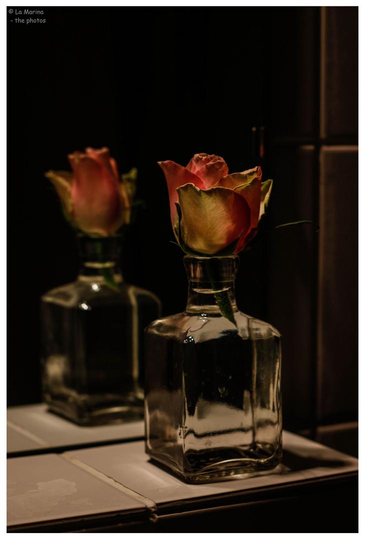 Eine Rose, ist eine Rose, ist eine Rose !!