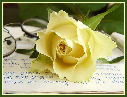 Eine Rose ist eine Rose, ist eine Rose, ist eine Rose. - reload -