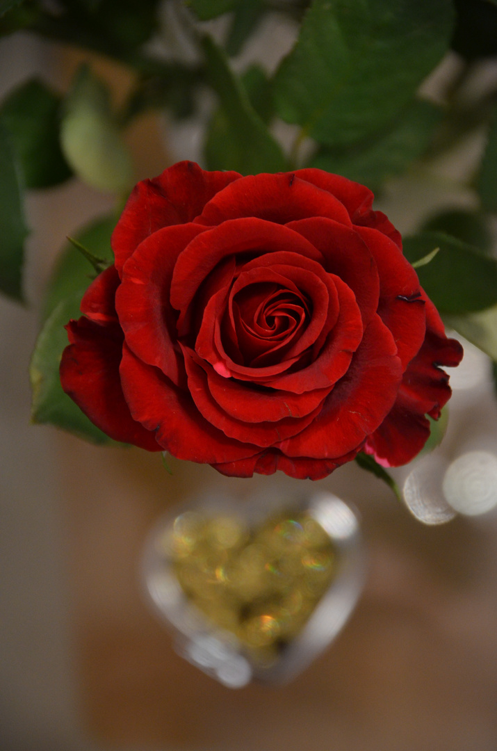 Eine Rose mit Herz :)