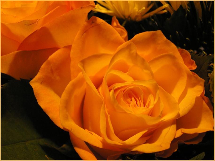 eine Rose zu Weihnachten - ein lieber Gruß für mich..