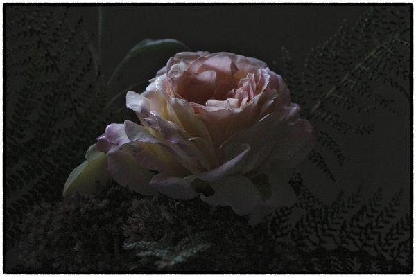 Eine Rose zum Abschied