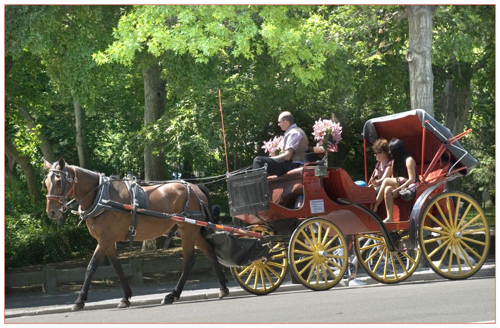 Eine Rundfahrt mit Pferd und Wagen in Central Park New York