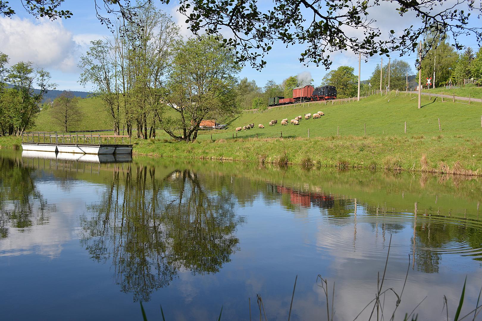 Eine Schafherde am Teich