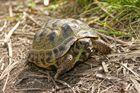 Eine Schildkröte,
