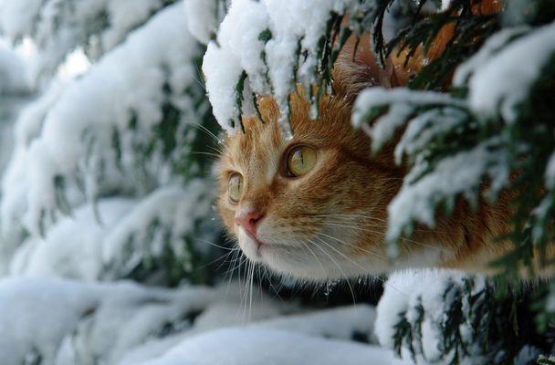 eine Schneehaube ...