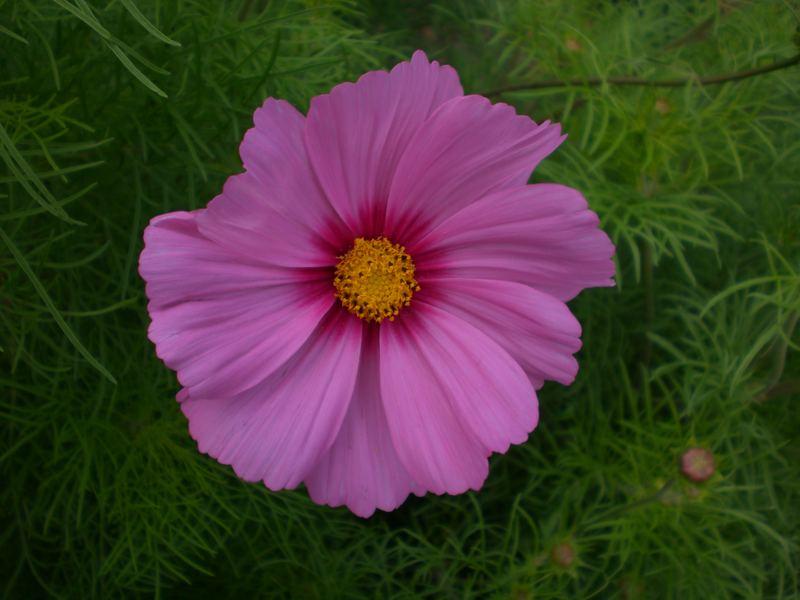 Eine schöne Blüte
