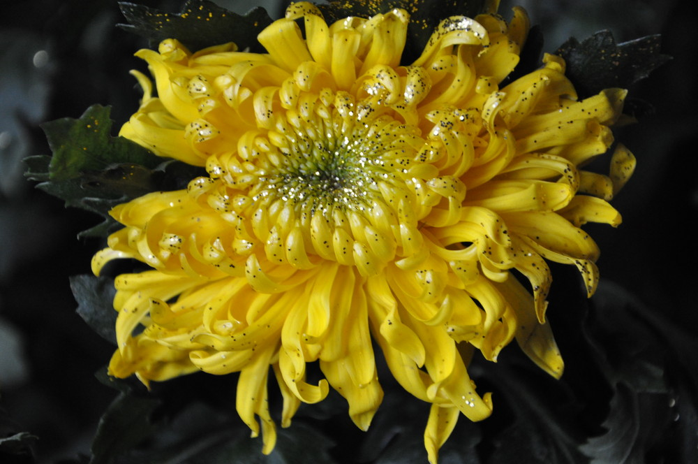 EIne schöne Blüte im Winter