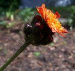 Eine schöne Blume..