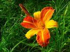 Eine schöne Blume - Name?