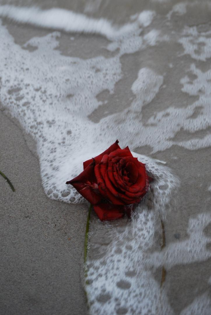eine schöne Fundsache am Strand
