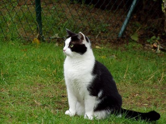 Eine schöne Katze oder?