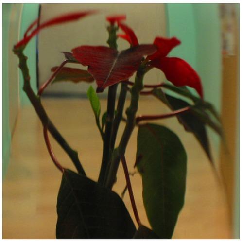 eine schöne pflanze.