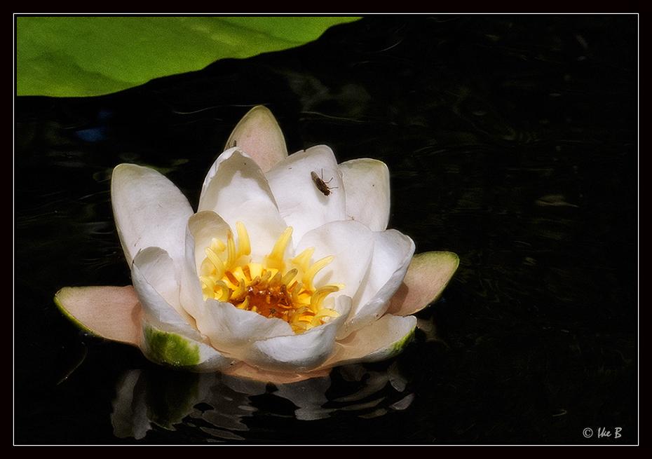Eine Schönheit vieler Seen......