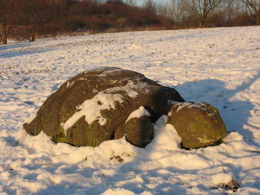 eine Schupsi im Schnee 2009