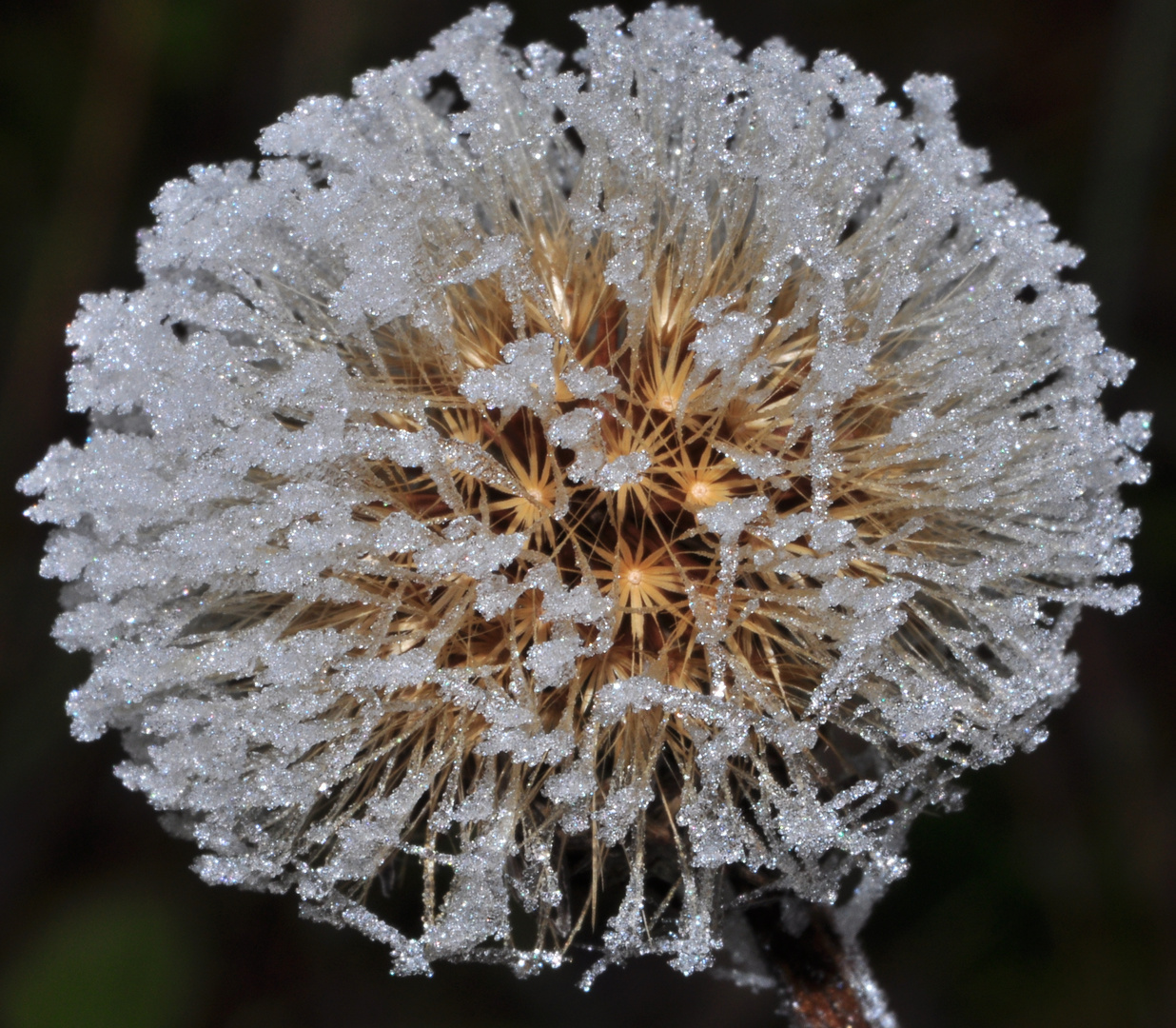 eine sehr schöne, aber leider zeitlich begrenzte, Weihnachtsdeko von Mutter Natur.