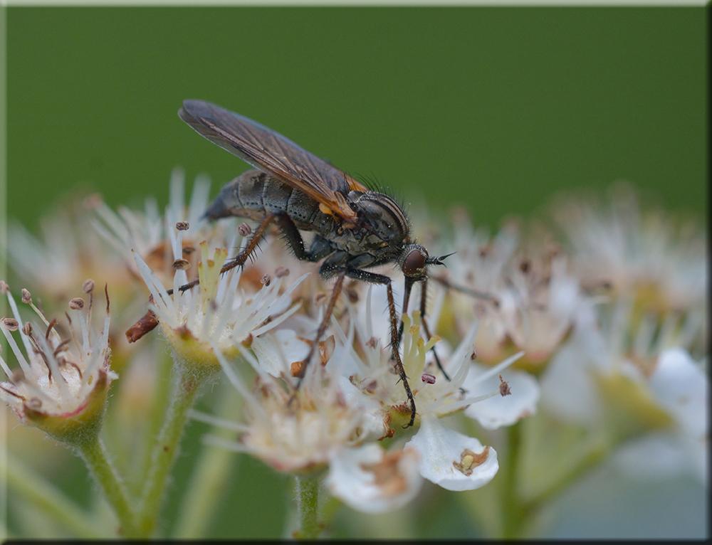 Eine seltsame Fliege