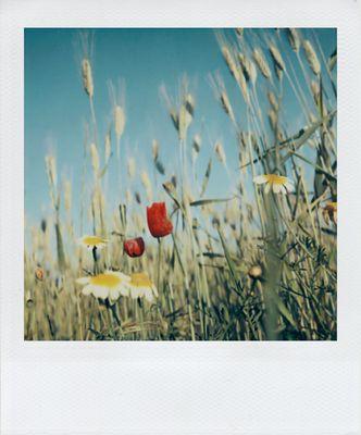Eine Sommerwiese