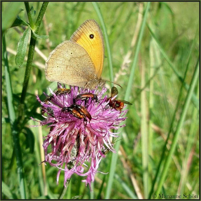 Eine Sommerwiese voller Leben...