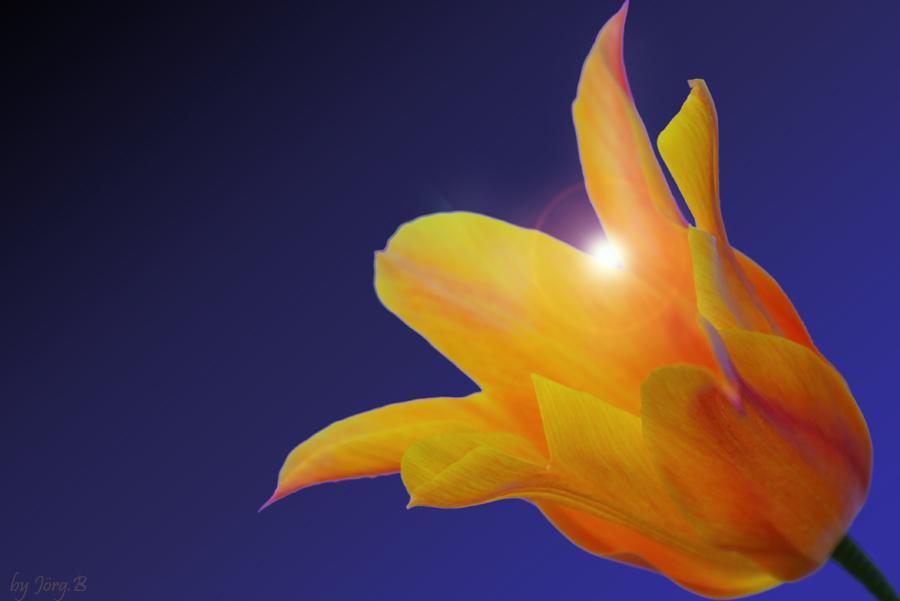 ... eine Sonnenblume ?? ...