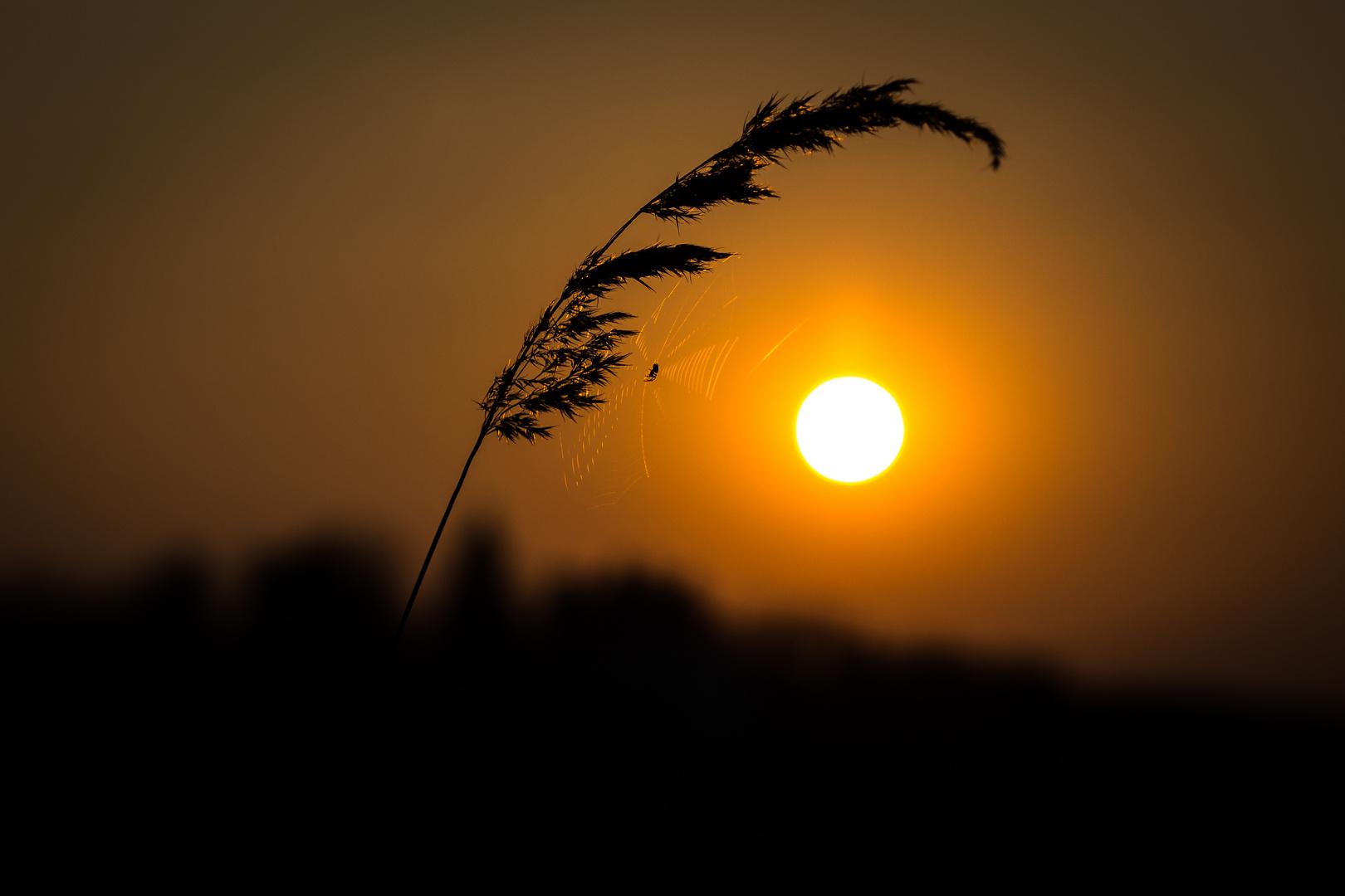 Eine Spinne genießt den Sonnenuntergang