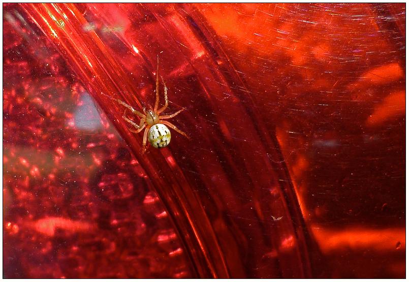 Eine Spinne im Farbrausch...!