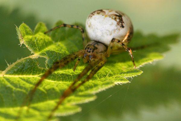 Eine Spinne im Herbst