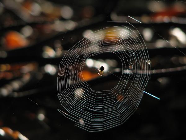 Eine Spinne in ihrem Netz