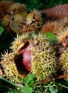 Eine stachelige Frucht.....