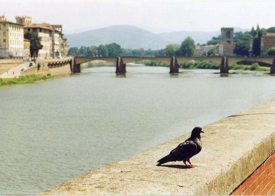 Eine Taube in Florenz...