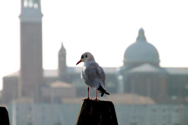 Eine Taube in Venedig
