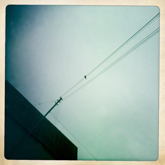 eine Taube macht noch keinen Frühling