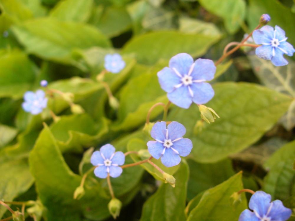 Eine Treppe aus kleinen Blumen