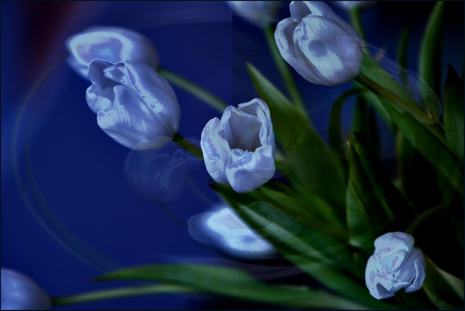 Eine Tulpe...