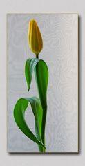 Eine Tulpe macht noch kein Frühjahr