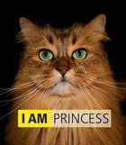 """Eine unserer verwöhnten Katzen """"Lady Princess"""""""
