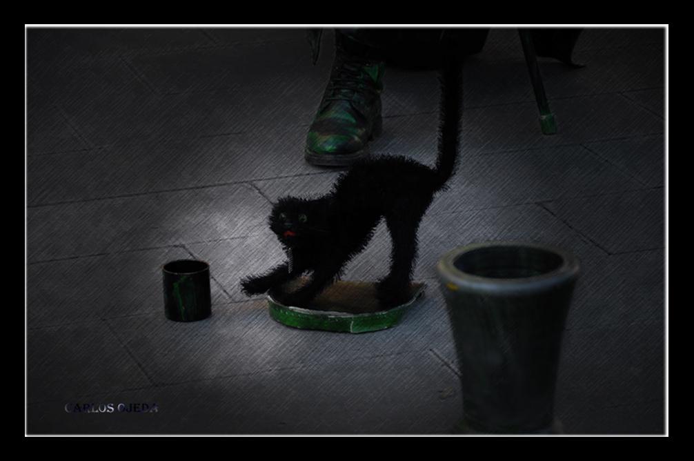 Eine verängstigte Katze - Un gato asustado