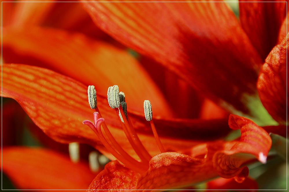 Eine von 18 Blüten