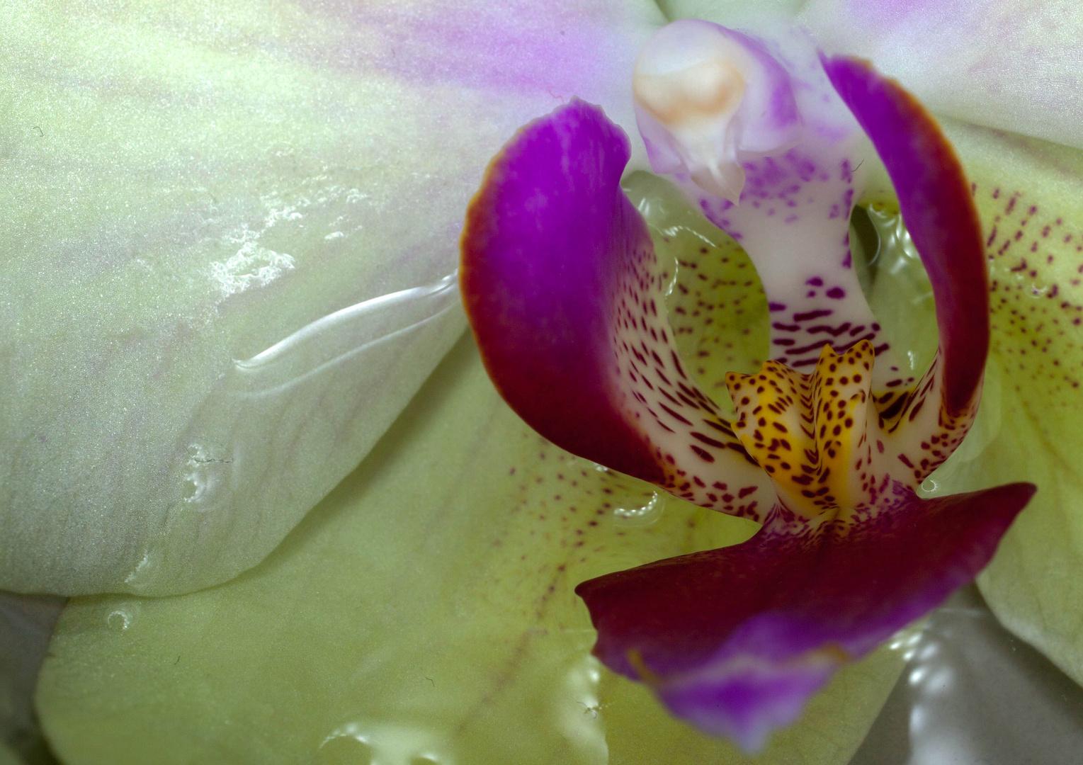 Eine von 1Mio Orchideenmakros :-)