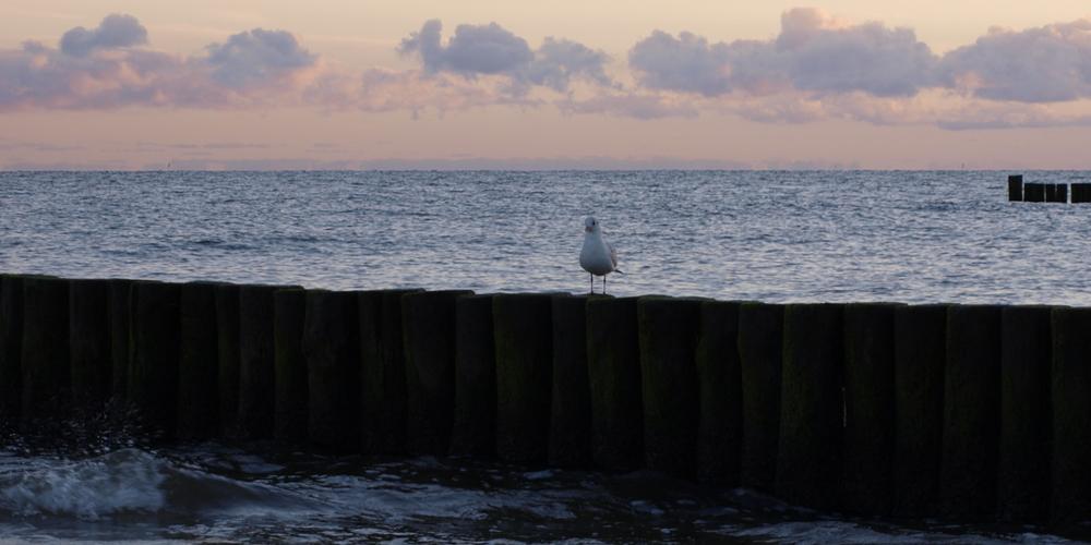 Eine wachsame Möwe am frühen Morgen.