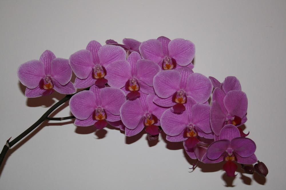 eine wahre Traube an Blüten