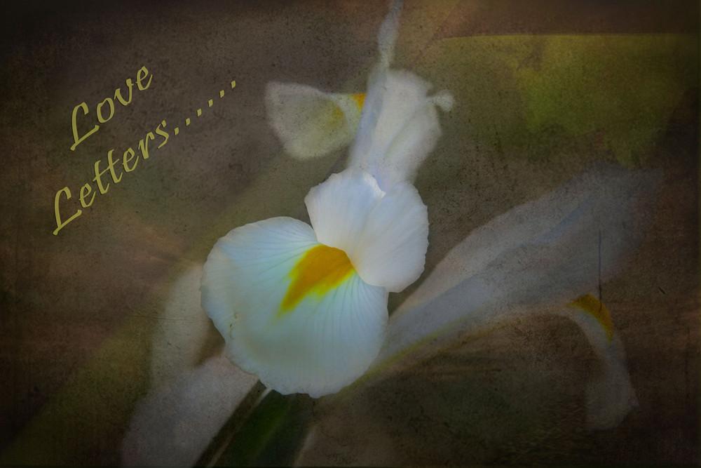 Eine weiße Lilie...